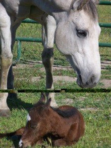 mother horse with newborn colt