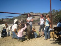 Youth Horseback Riding Camps