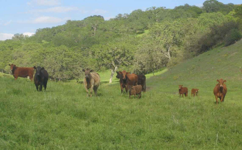 brush-crush-cows-work-ranch2